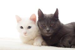 gulliga katter Arkivbild