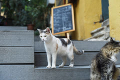 gulliga katter royaltyfria bilder