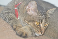 gulliga katter Arkivfoton