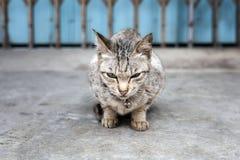 Gulliga katter har kalla tecken Royaltyfria Foton