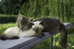 Gulliga katter i trädgården Fotografering för Bildbyråer