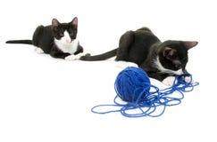Gulliga katter med garn Royaltyfri Fotografi