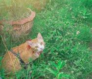 Gulliga katter på isolerad bakgrund Använda tapeten eller bakgrund Royaltyfria Foton