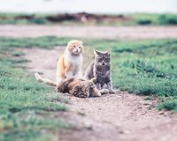 Gulliga katter som ligger på en grön äng i det tidiga vår- och lekGet Arkivfoton