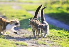 gulliga katter som spelar i det gröna gräset som anfaller sig arkivbild
