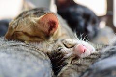 Gulliga katter sover tillsammans Fotografering för Bildbyråer