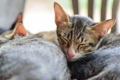 Gulliga katter sover tillsammans Arkivfoto