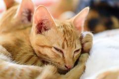 Gulliga katter sover tillsammans Royaltyfri Fotografi