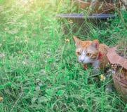 Gulliga katter spelar i huset på gräsmatta Royaltyfria Bilder