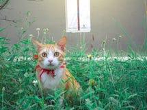 Gulliga katter spelar i huset på gräsmatta använda tapeten eller b Arkivbild