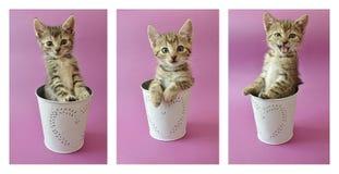 gulliga kattungar Arkivfoton