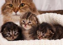 Gulliga kattungar Royaltyfri Bild