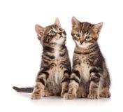 gulliga kattungar Arkivfoto
