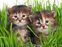 gulliga kattungar Royaltyfri Fotografi
