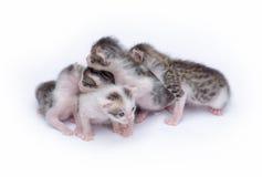 gulliga kattungar för bakgrund som leker white Royaltyfria Bilder