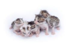 gulliga kattungar för bakgrund som leker white Arkivbilder