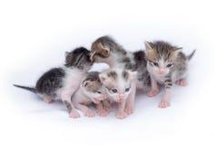gulliga kattungar för bakgrund som leker white Royaltyfri Bild