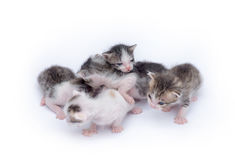 gulliga kattungar för bakgrund som leker white Fotografering för Bildbyråer