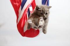 Gulliga kattungar i en säck fotografering för bildbyråer