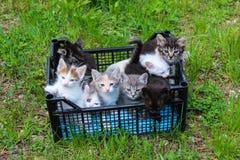Gulliga kattungar i en spjällåda för adoption Royaltyfri Foto