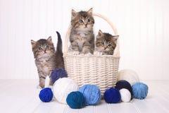 Gulliga kattungar med garnnystan Royaltyfri Bild