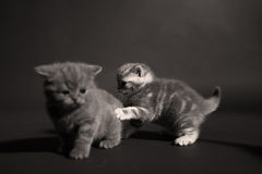 Gulliga kattungar på golvet Royaltyfri Fotografi