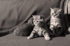 Gulliga kattungar på golvet Royaltyfria Foton
