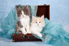 Gulliga kattungar som sitts i resväska Arkivfoto