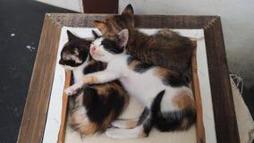 Gulliga kattungar sover Fotografering för Bildbyråer