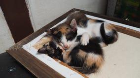 gulliga kattungar tre Arkivbild