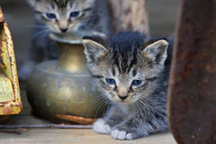 gulliga kattungar två Royaltyfri Bild