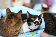 gulliga kattungar två Royaltyfria Bilder