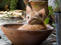 Gulliga Kitten Sitting i en kruka arkivfoto