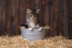 Gulliga Kitten With Straw i en ladugård arkivbild