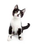 Gulliga Kitten With Sweet Expression Arkivbilder