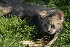 Gulliga Kitty Lurking på gräsmattan, Tjeckien, Europa Arkivbild
