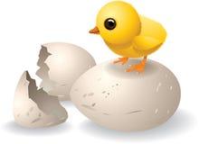 Gulliga kläckte Chick Vector Arkivbilder