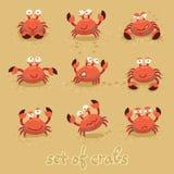 Gulliga krabbor, roliga tecken bränning för sommar för stenar för strandkustcyprus medelhavs- sand vektor Arkivbild