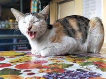 Gulliga lilla Cat Kitty Pussy Cat Adorable Beautiful Cat Love Wild Life royaltyfria bilder