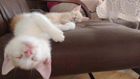 Gulliga lilla kattungar Royaltyfri Foto