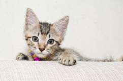 Gulliga lilla Tabby Kitten Royaltyfri Fotografi