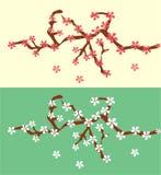 Gulliga och trevliga blommor för körsbärsröd blomning på trädet royaltyfri fotografi