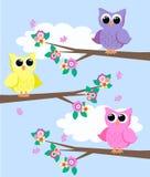 gulliga owls Fotografering för Bildbyråer