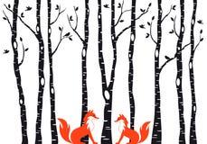 Gulliga rävar med björkträd, vektor royaltyfri illustrationer