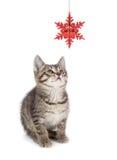 Gulliga randiga Kitten Playing med en julprydnad på vit Royaltyfri Foto