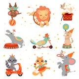 Gulliga roliga djur som utför i cirkusshowuppsättningen, djur banhoppning till och med flammande beslag, jonglera som balanserar  stock illustrationer