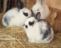 Gulliga roliga kaniner Fotografering för Bildbyråer