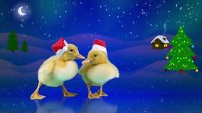 Gulliga roliga nyfödda ankungar i jultomtenhattar som glider på isen lager videofilmer