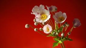 Gulliga rosa färgblommor