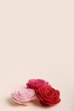 Gulliga rosa färger och röda blommor på en kräm- bakgrund Fotografering för Bildbyråer